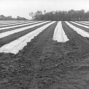 Prepared Field near Atsion