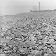 Shells, Seaside Heights